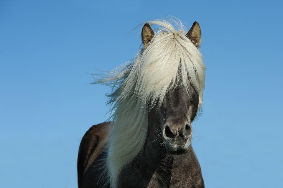 Comment vaincre la peur des soins des chevaux?