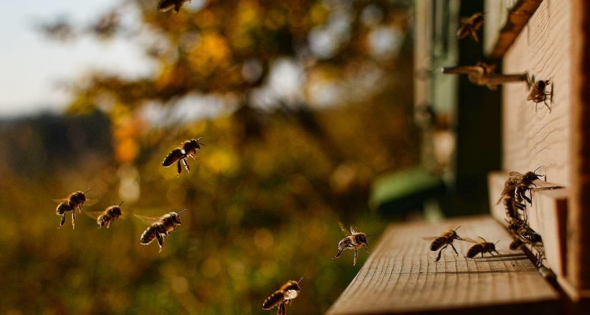 Comment bien choisir son matériel d'apiculture ?