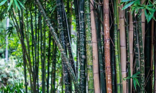 Opter pour la tendance actuelle en vaisselle écologique: le bambou